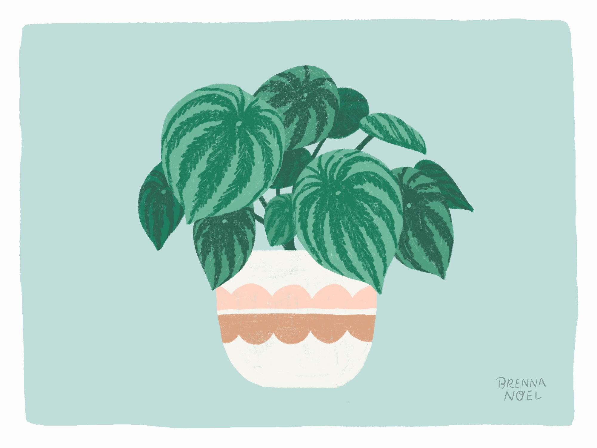 BN-Dribbble-Houseplant11.jpg