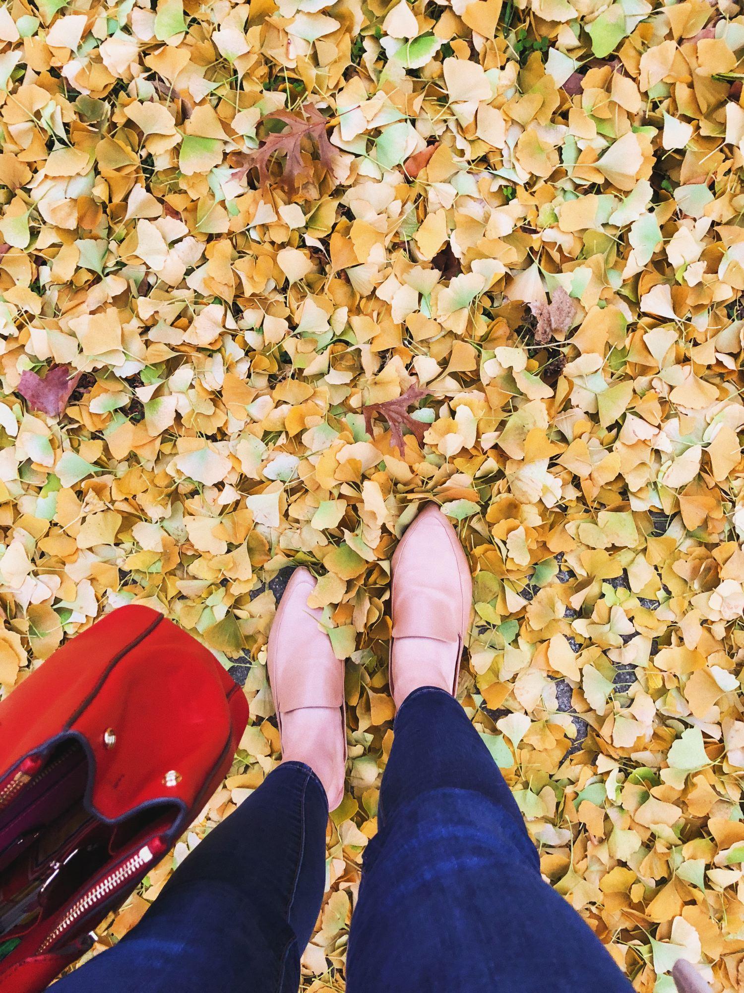 11 /  Fall