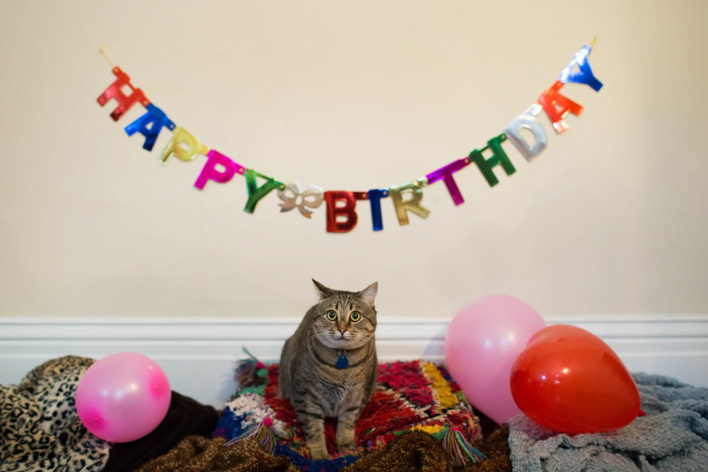 11 /  Irving's 2nd Birthday