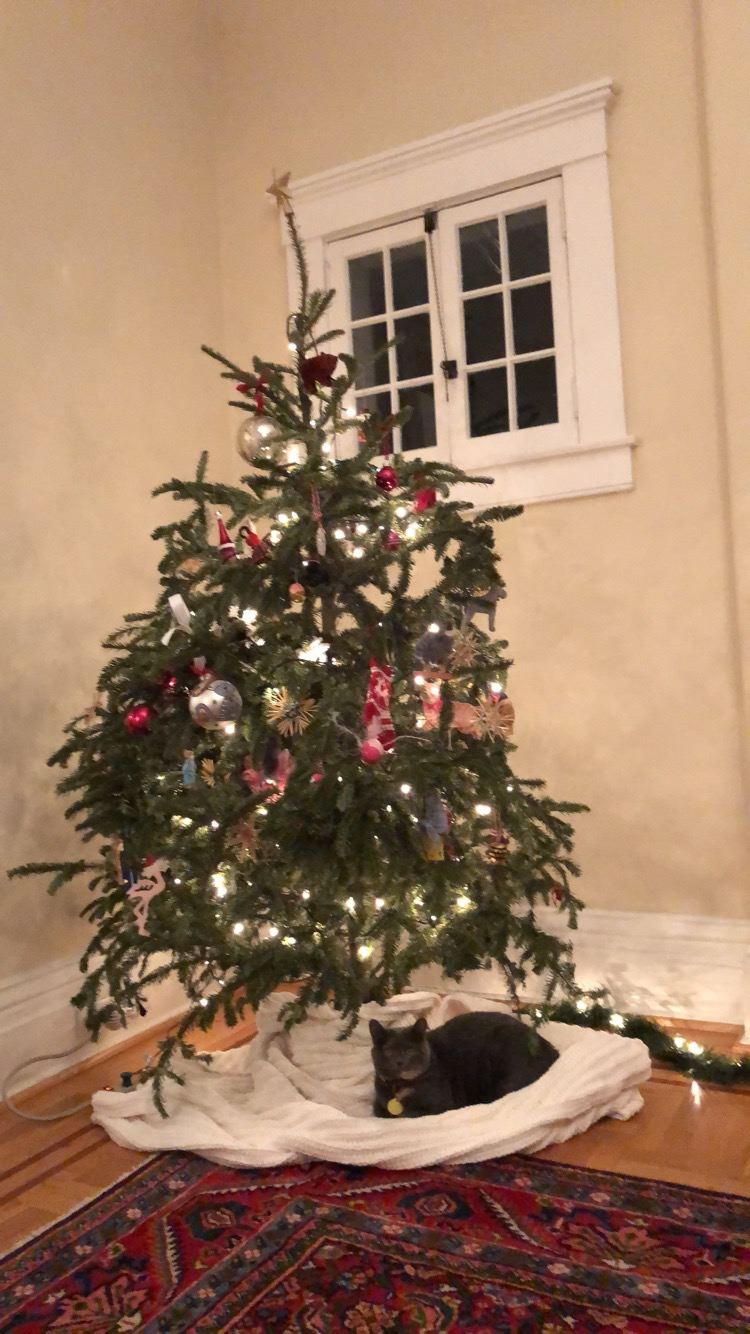 12 /  Rooney under the Christmas tree