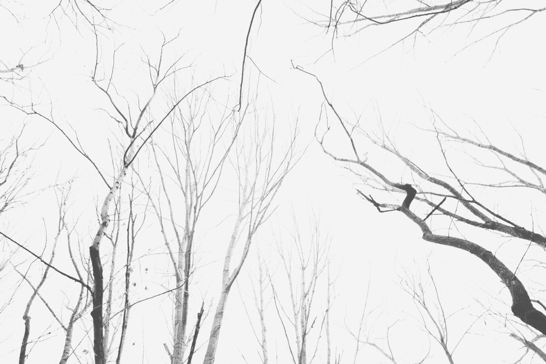 Week 5: Winter | Project 52 | You've Got Flair