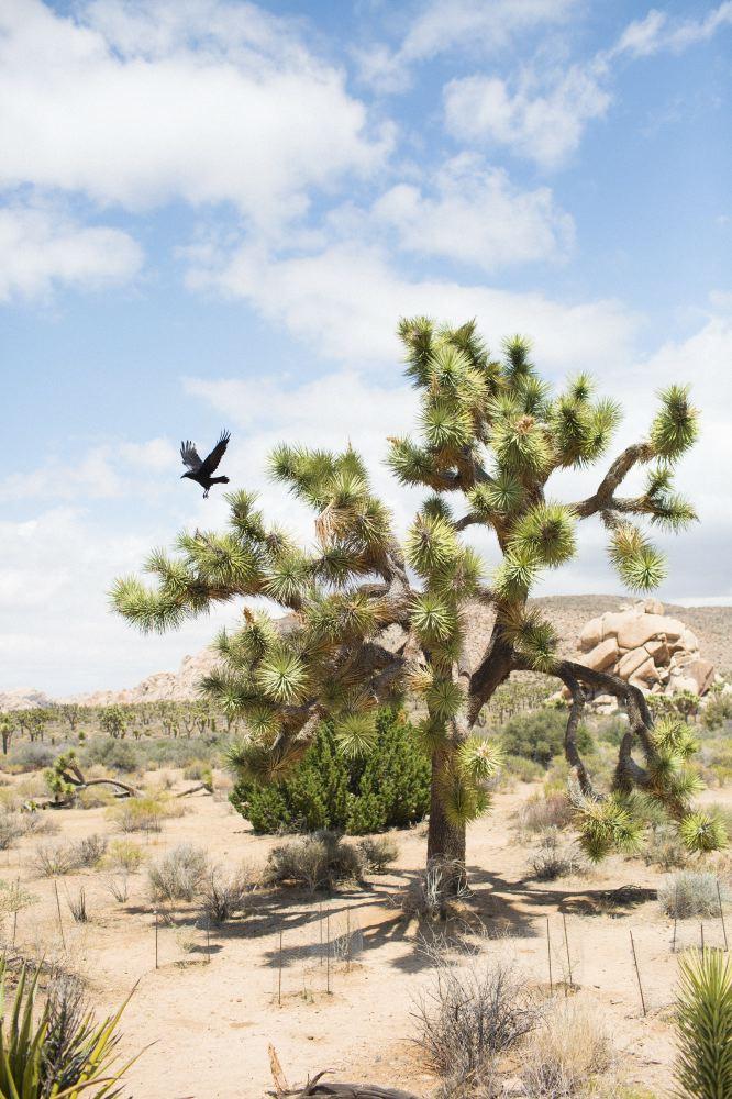 Joshua Tree | You've Got Flair