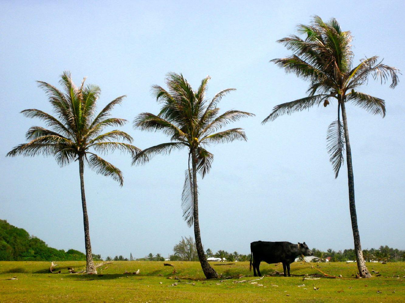 You've Got Flair | Travel | Barbados | 018.JPG