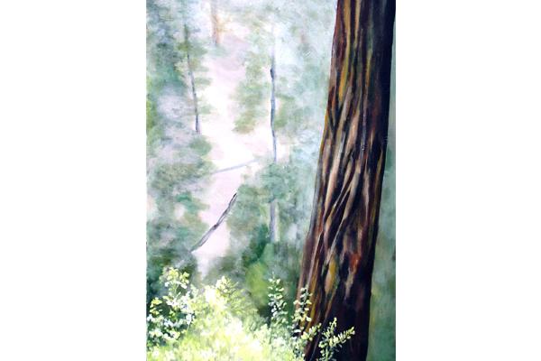 Cedar and Mist
