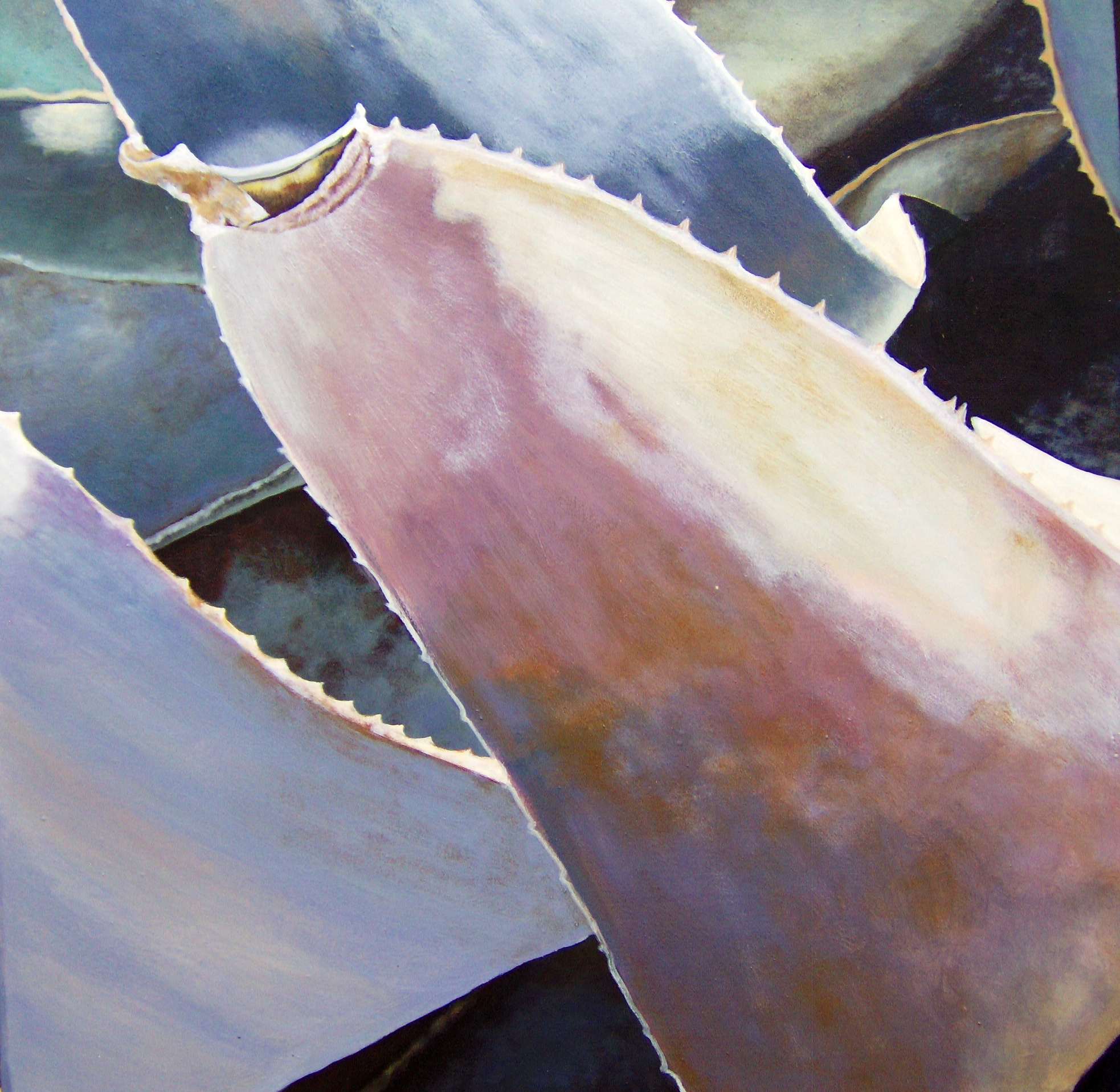 Gray Agave