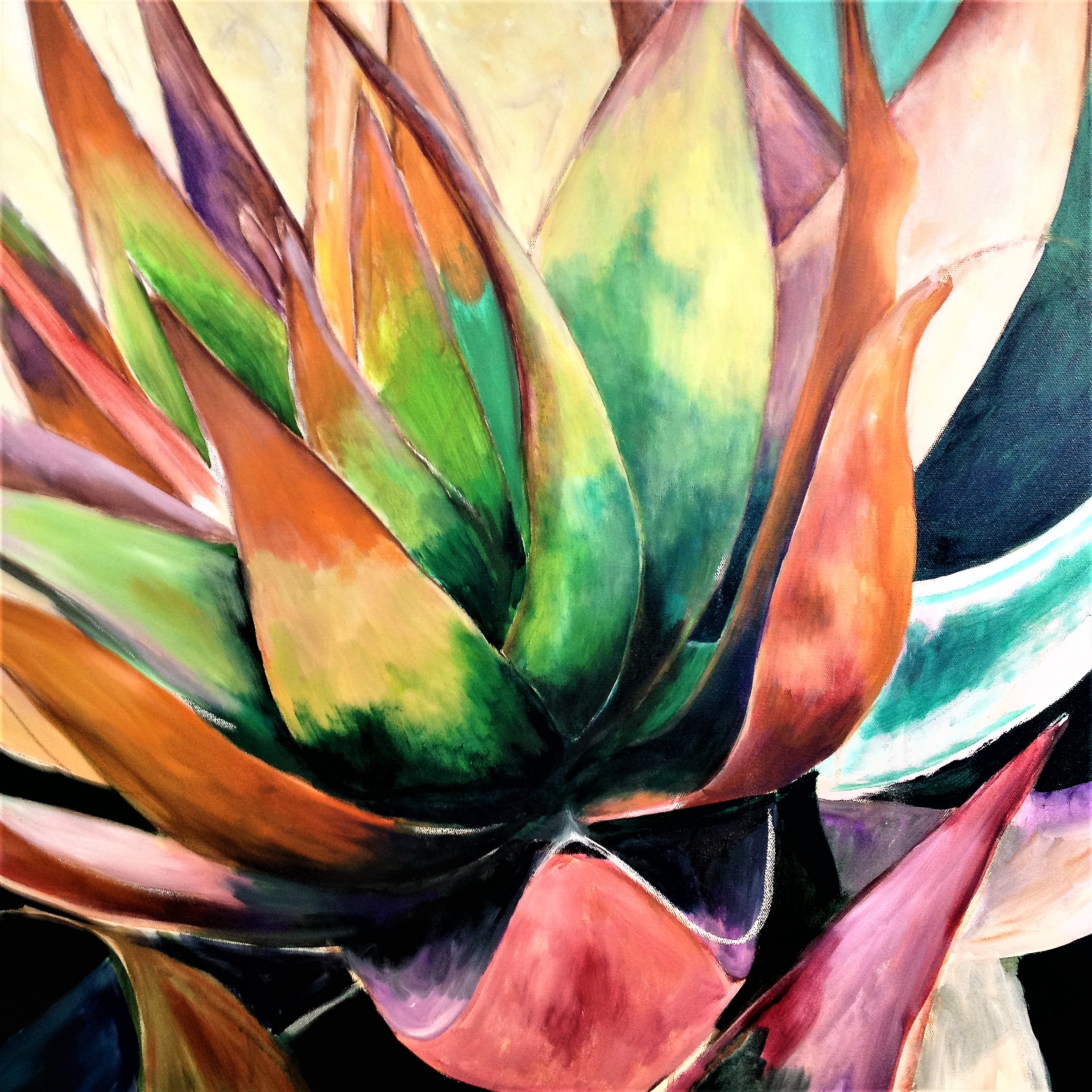 Colorful Agave