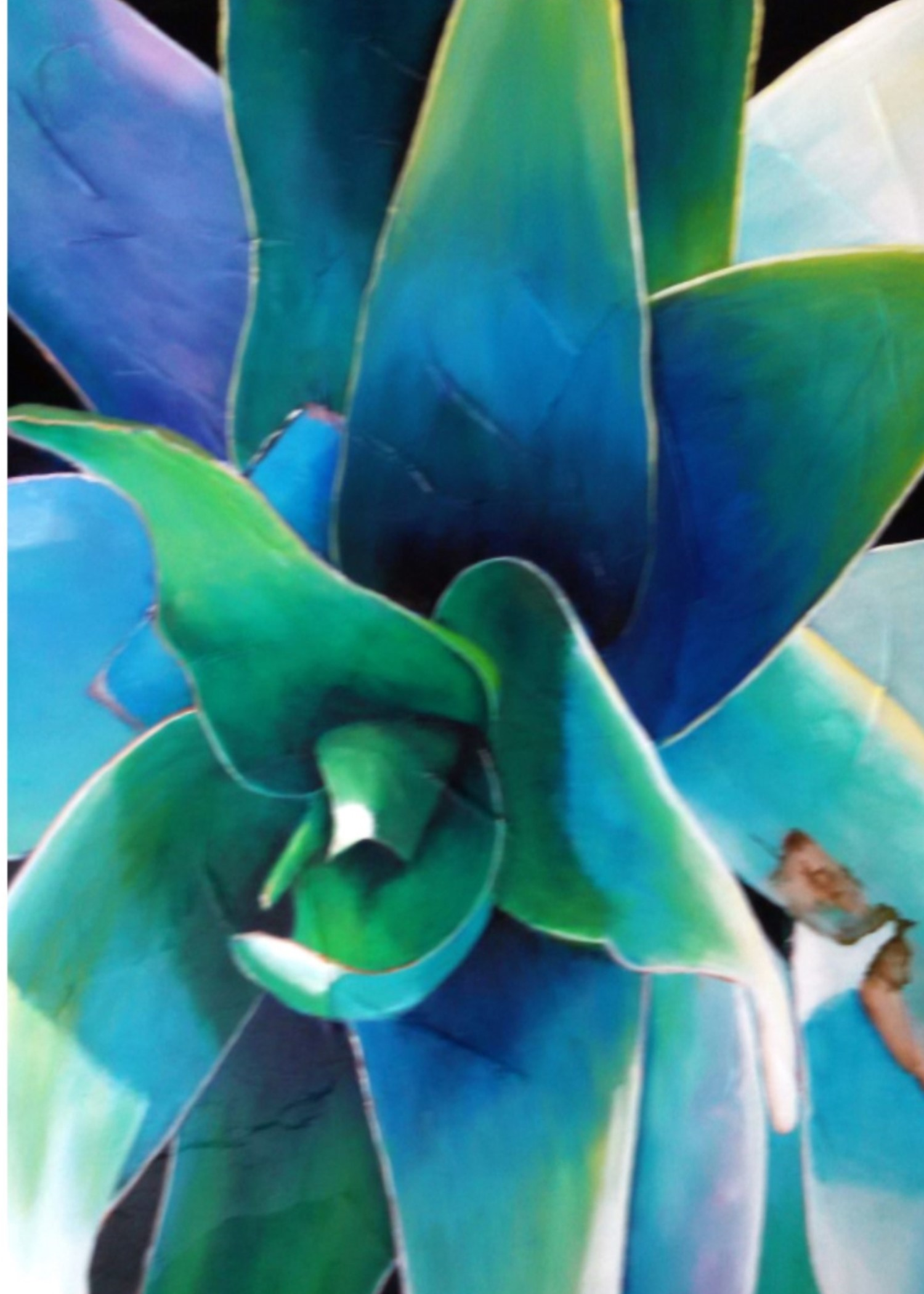6 CARD NOTECARD SET - DESERT PLANTSAT Bungalow 17 Studio, Palm Springs