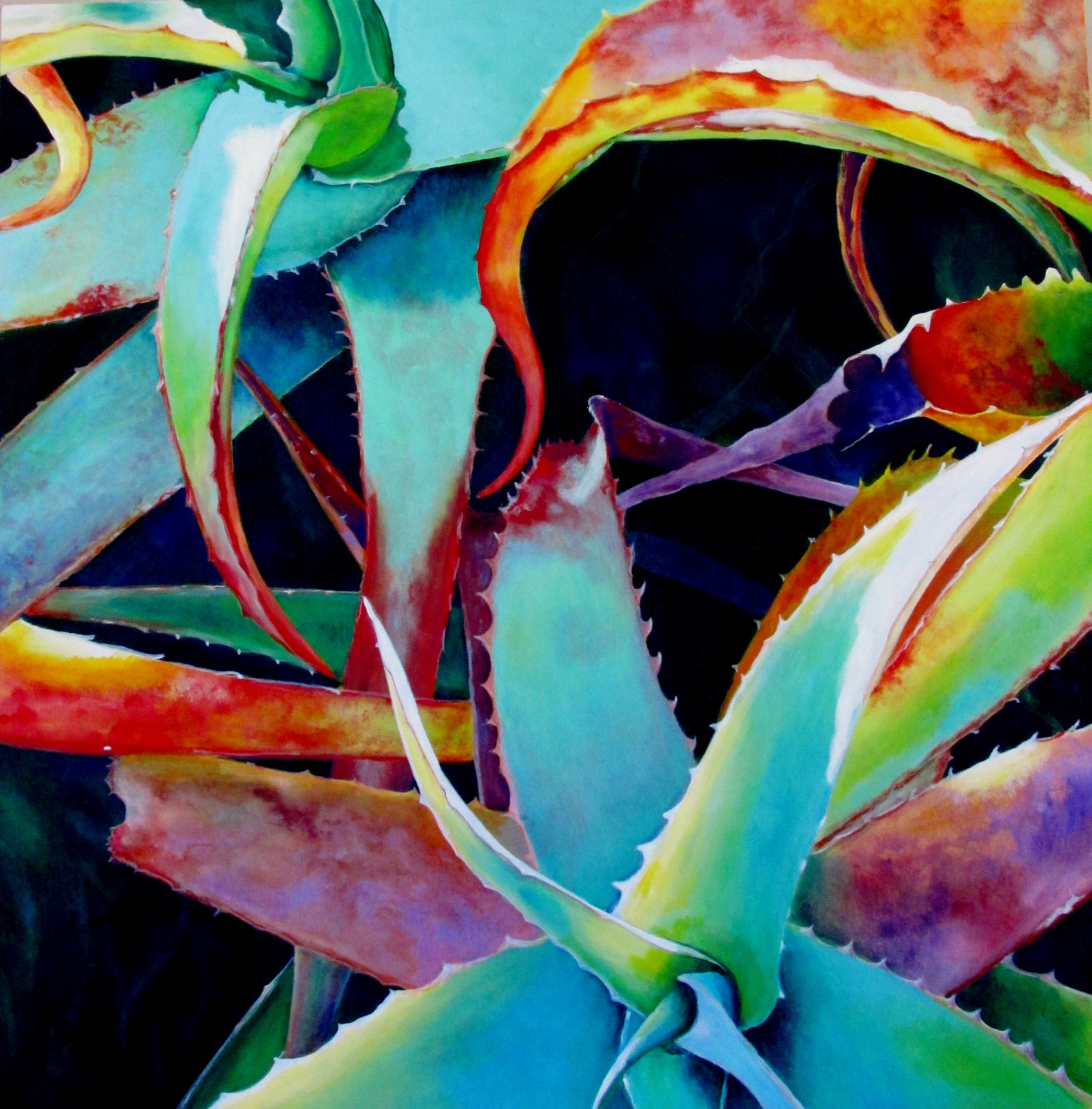 Colorful Aloe