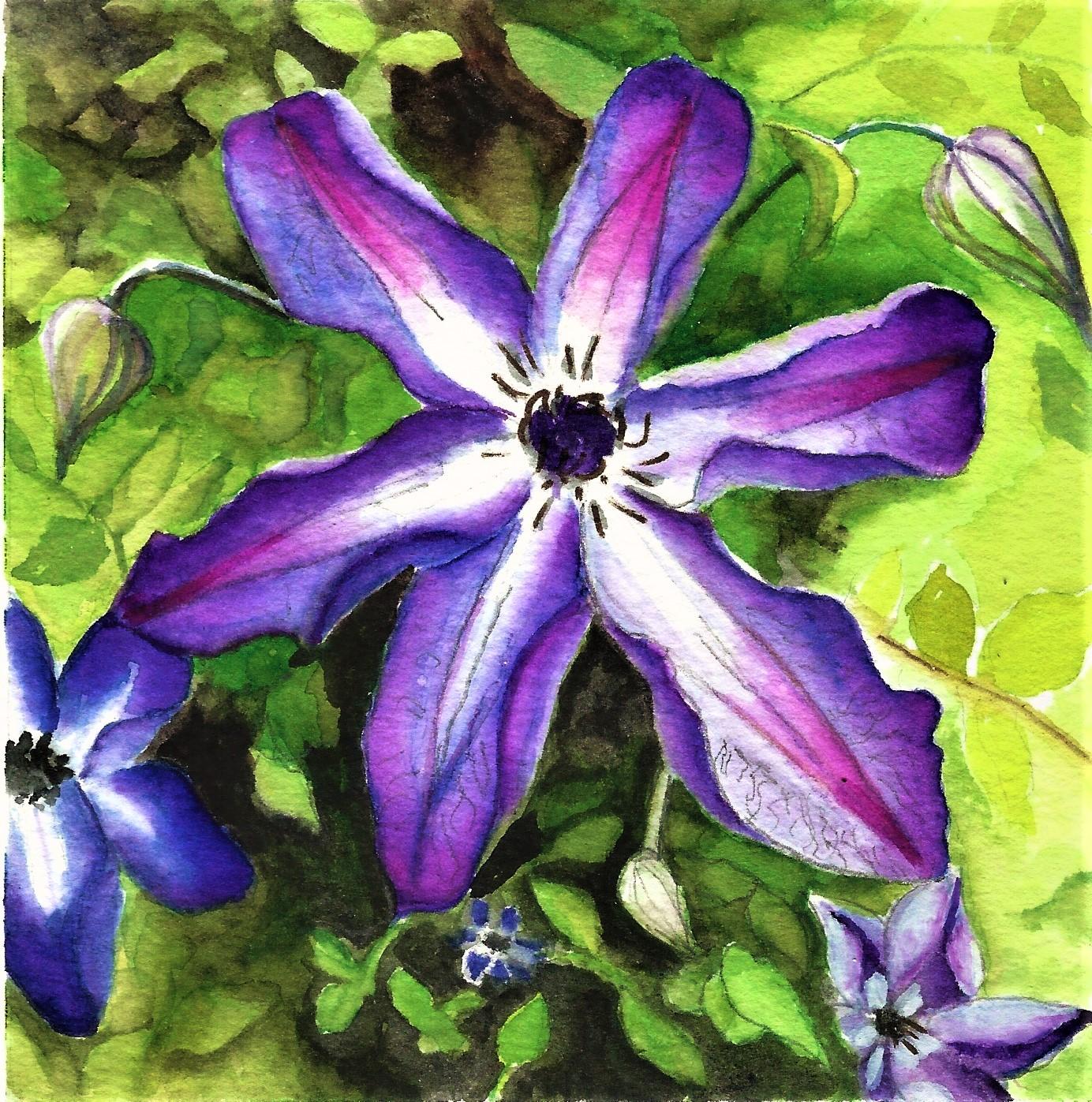 Venosa Violaceaforweb.jpg