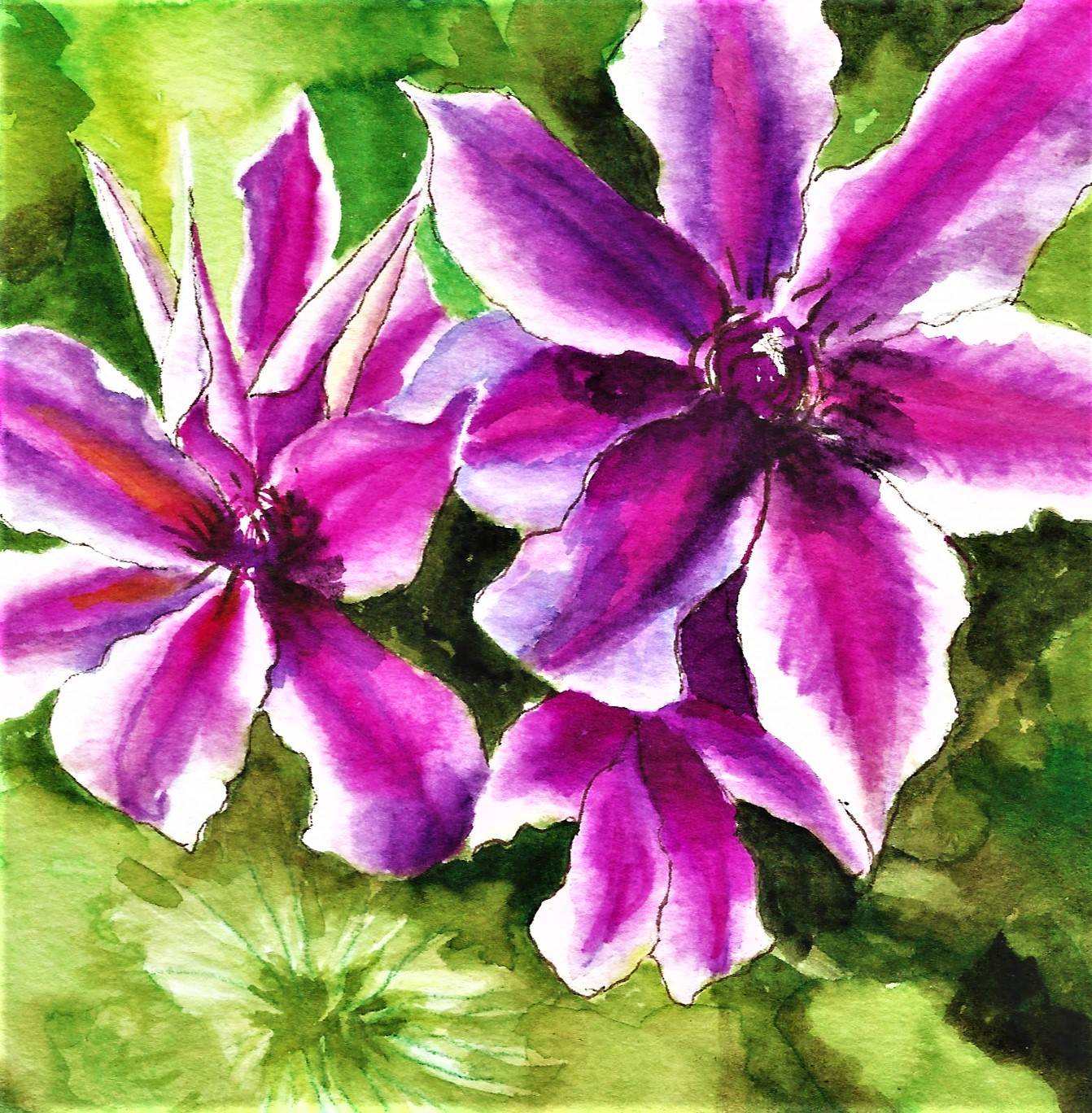 WATERCOLOR PAINTINGS - CLEMATISFOR THE FRIENDS OF THE ROGERSON CLEMATIS COLLECTION