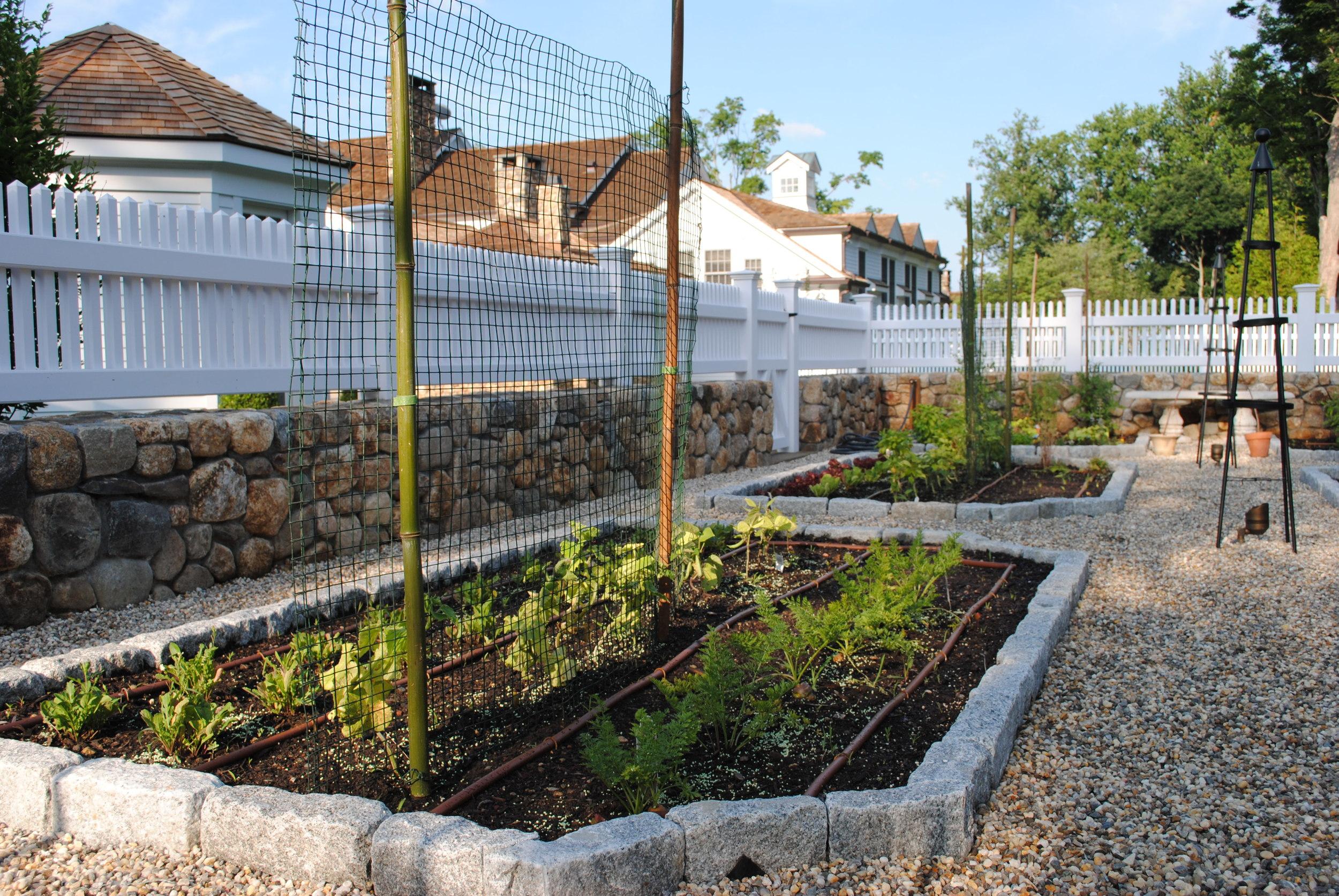 vegetable-garden-good-gardens.JPG