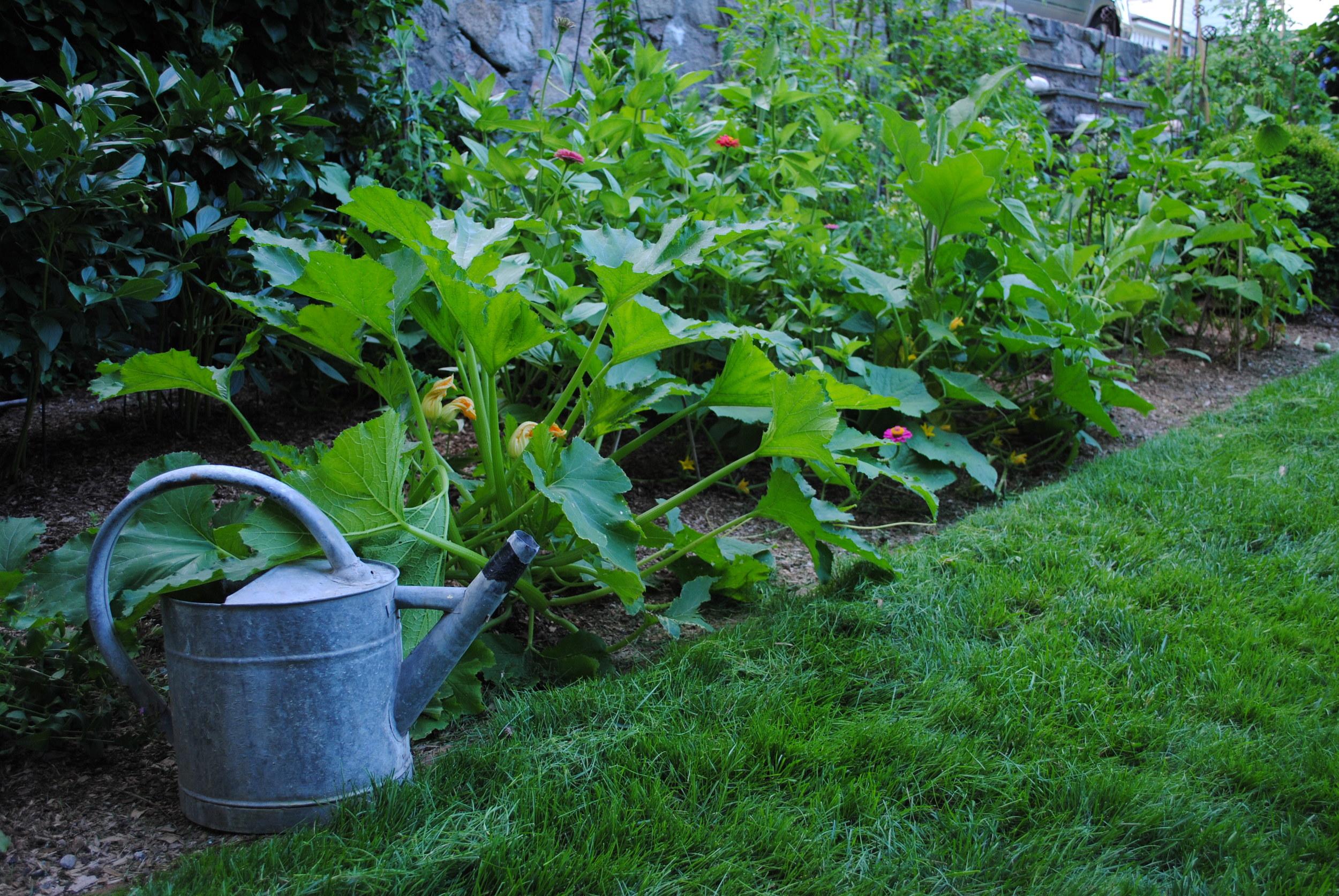veggies-good-gardens.JPG