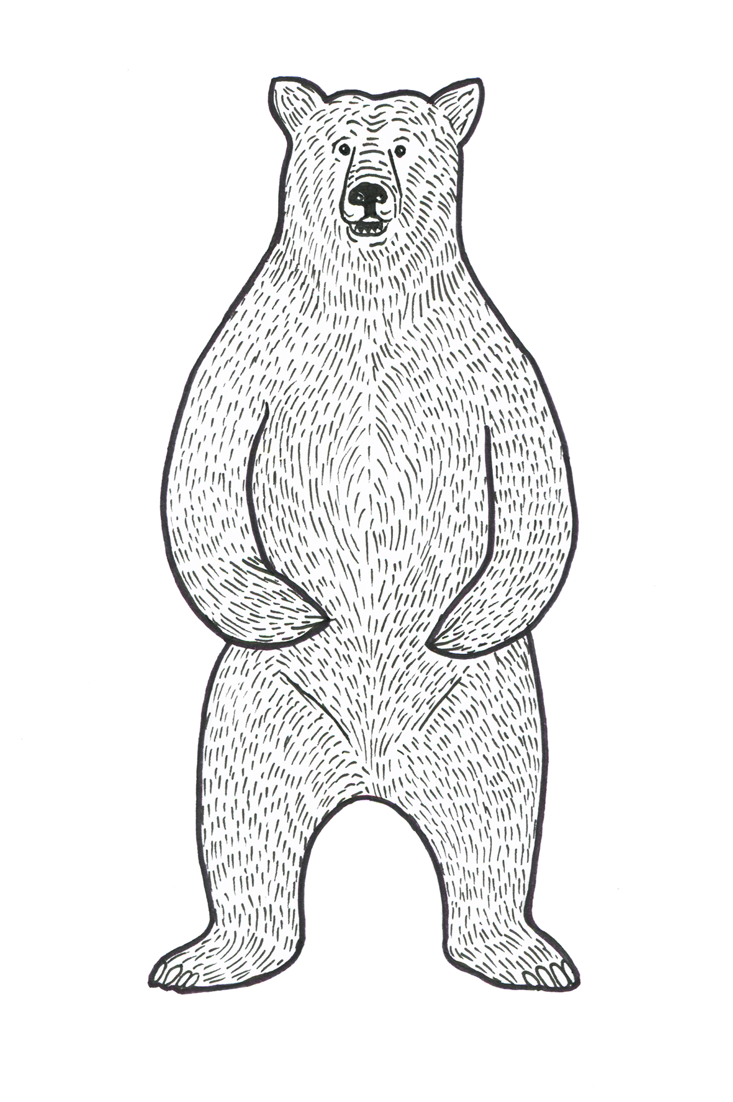 web-bear-illustration.jpg