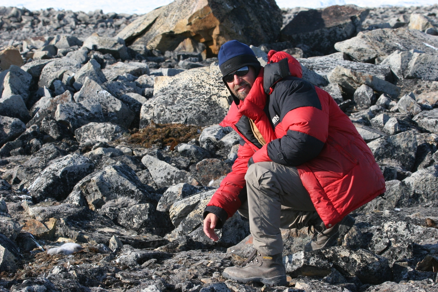Dr. Mark Mallory is a Canada Research Chair on Coastal Wetland Ecosystems, based at  Acadia  University in Nova Scotia.  He has been studying High Arctic gulls since 2000, and was the lead on building the  Nasaruvaalik Island  research station.  His work has been highly collaborative with most of the rest of the HAGRG members, investigating issues of breeding phenology, reproductive success, annual survival, movements and key habitat sites, and contaminants in many of these birds.