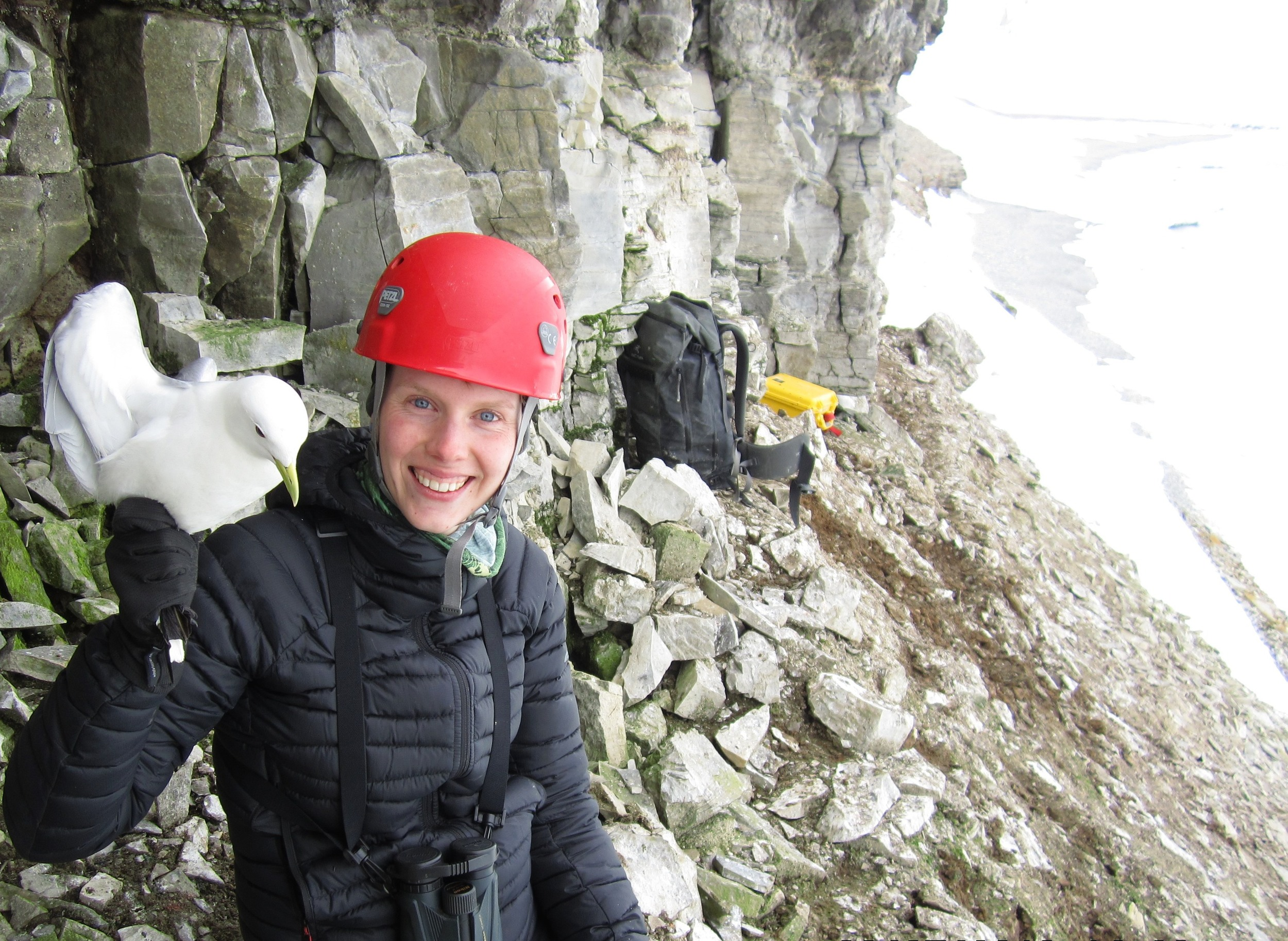 Nora Spencer has a B.Sc from Dalhousie University and a M.Sc. in Biology from Acadia University. She began working with passerines and transitioned to seabird conservation for her graduate work. Her master's thesis investigated the  annual movements and critical winter habitat of the endangered ivory gull ( Pagophila eburnea ) in the Canadian High Arctic .  Nora's research interests include examining the spatial ecology and behaviour of animals in relation to their conservation.