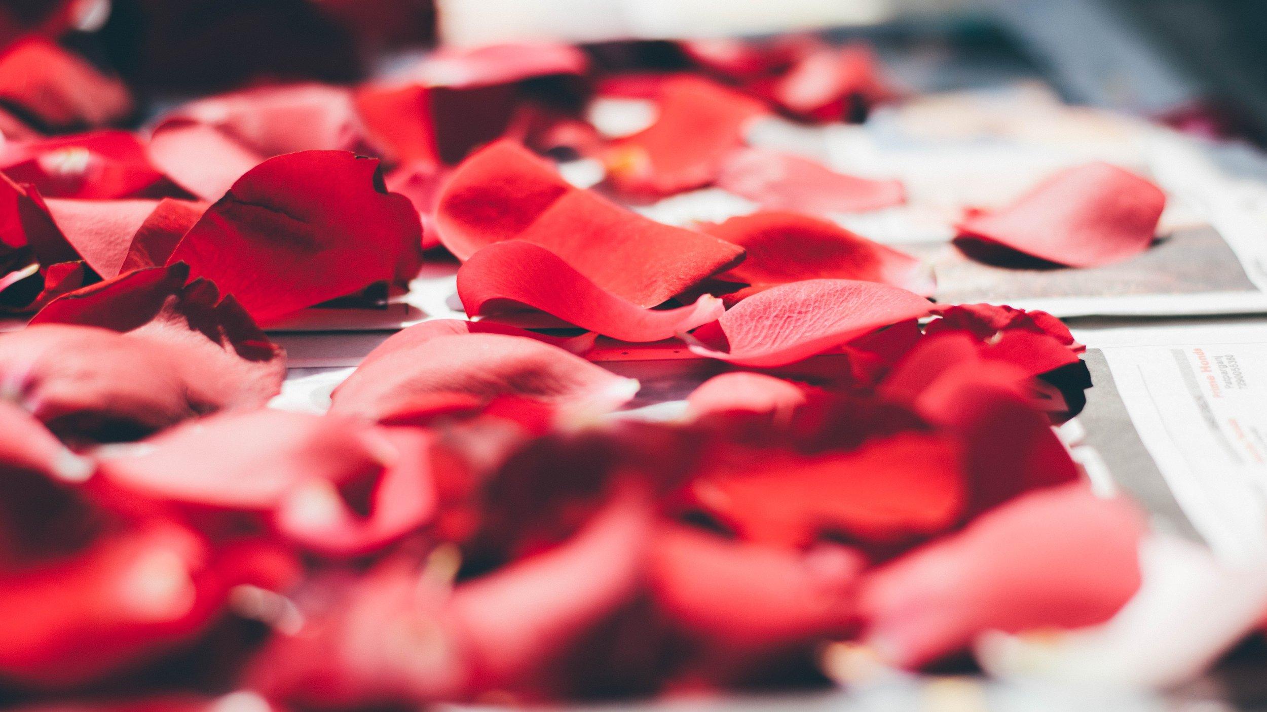 Cena Romántica Premium. - Menú de seis tiempos para dos,Botella de Vino espumoso Artesanal,Kiosko privado decorado con velas y pétalos de rosas,Fogata, Recuerdo Fotográfico con Servicio personalizado.$4,500 mxnPregunta por nuestros paquetes para huéspedes.