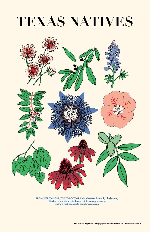 flora1.png