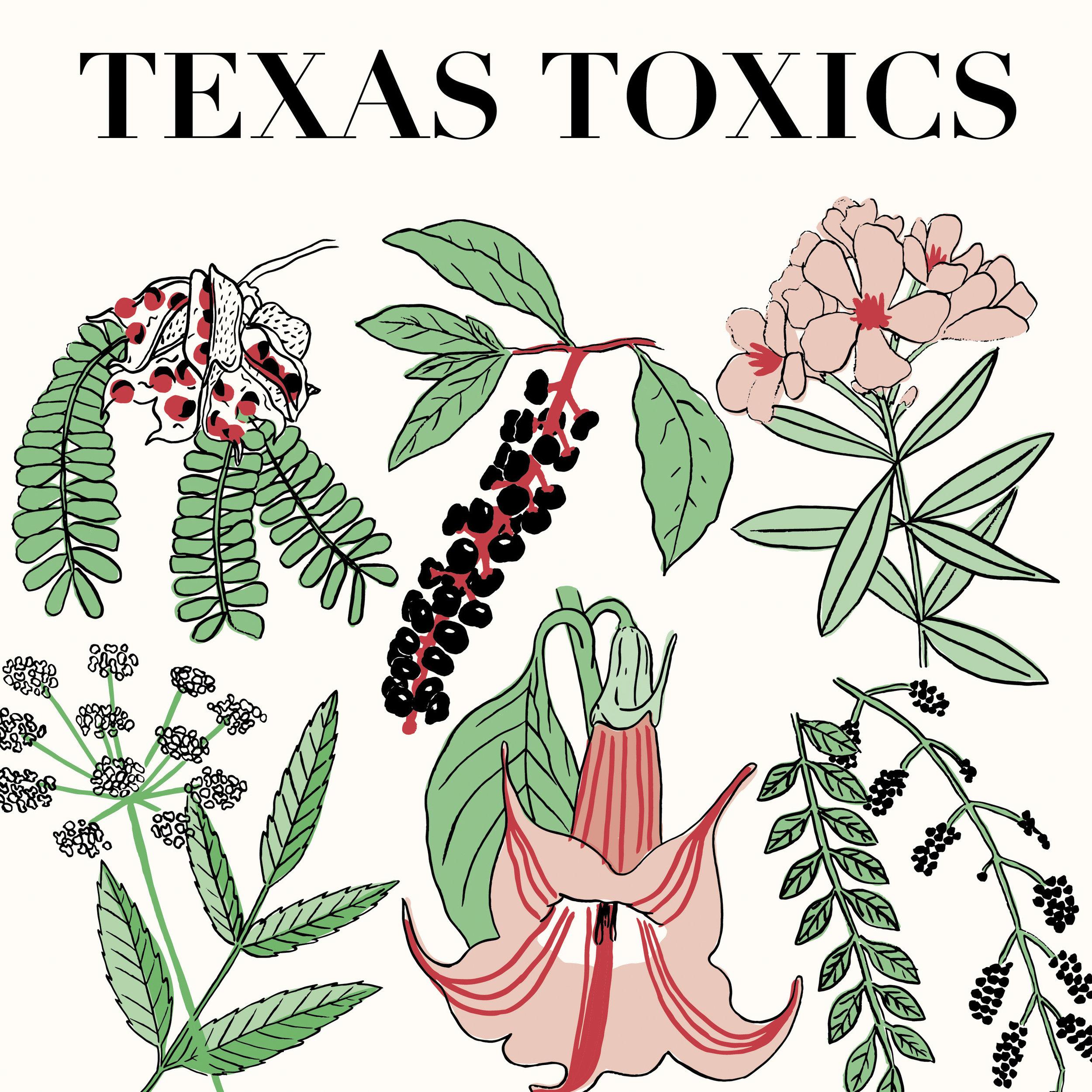 Texas Flora (series)