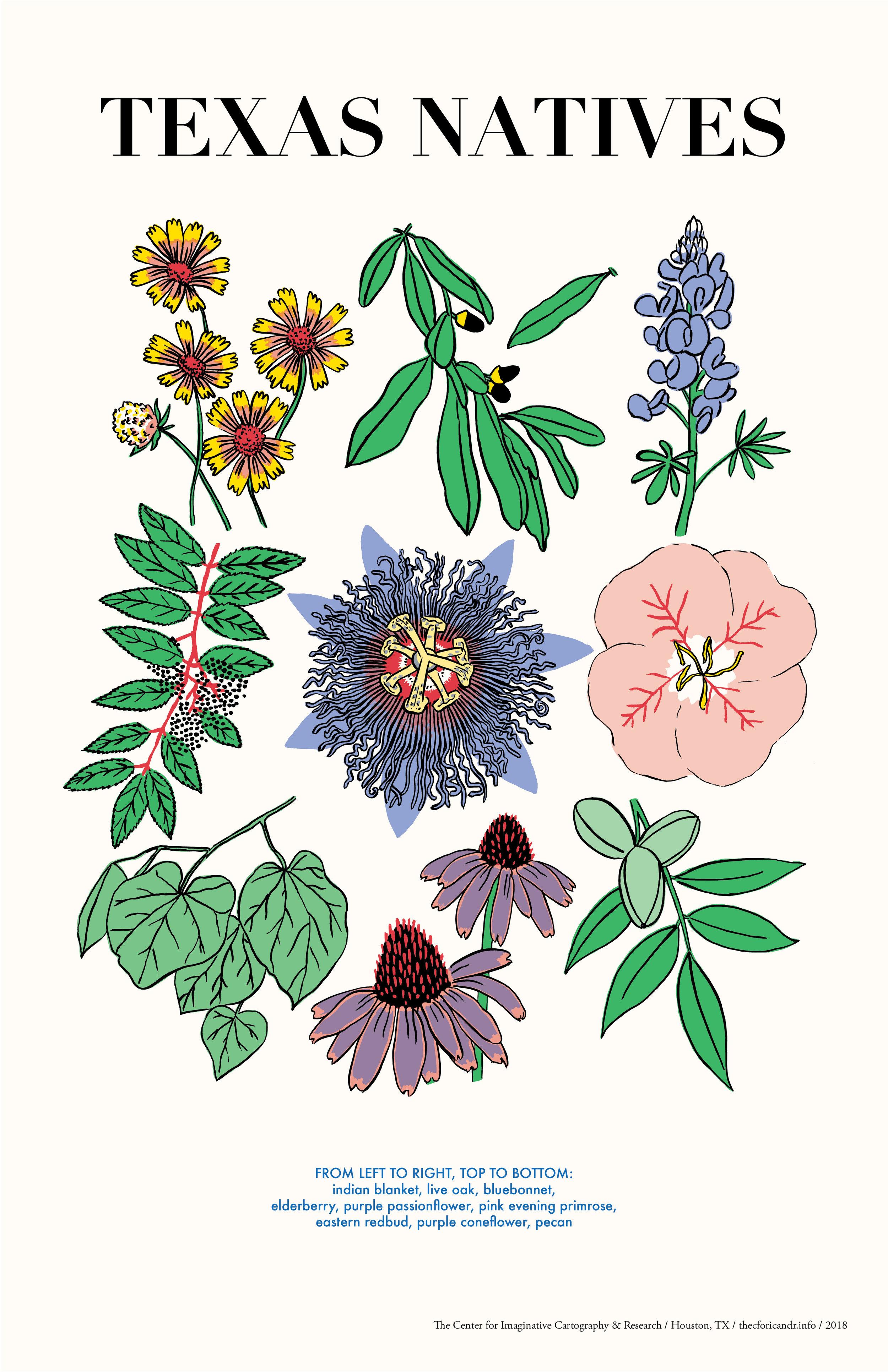 natives-color-EXPORT.jpg