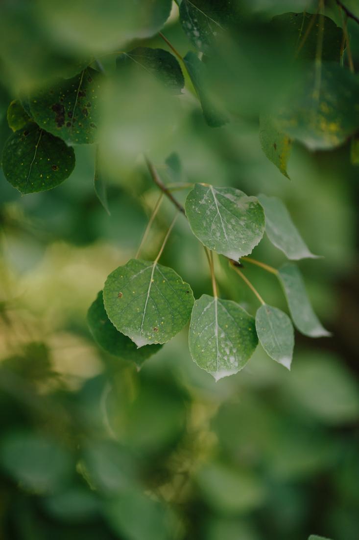 Warm Weather Green Leaves During September | Cat Mayer Studio | www.catmayerstudio.com