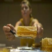 Austin Statesman: As bee population wanes, one Austin honey-maker presses on
