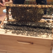 KXAN: Sustainable Food Center Welcomes New Queen Bee