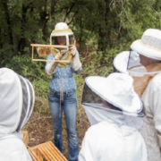 Time Out Austin Names our hive tours as one of the top tours in Austin