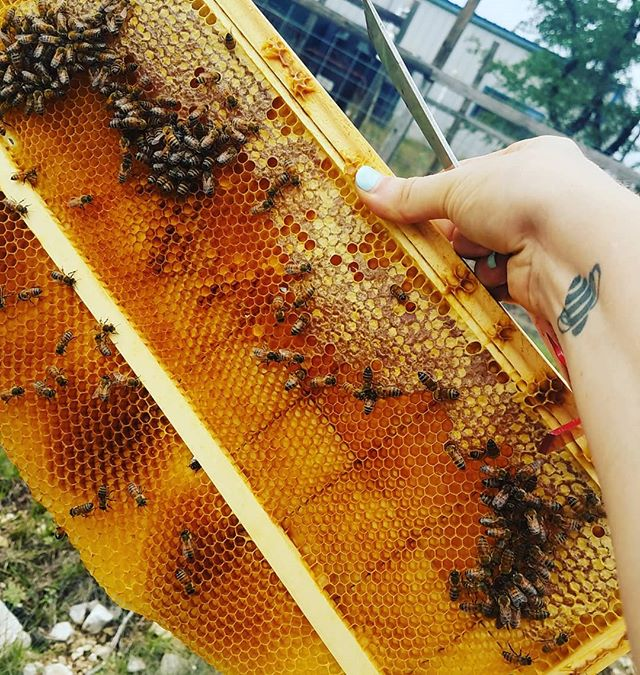 What happens when you put a medium frame into a deep hive body.  The bees #makeitwork