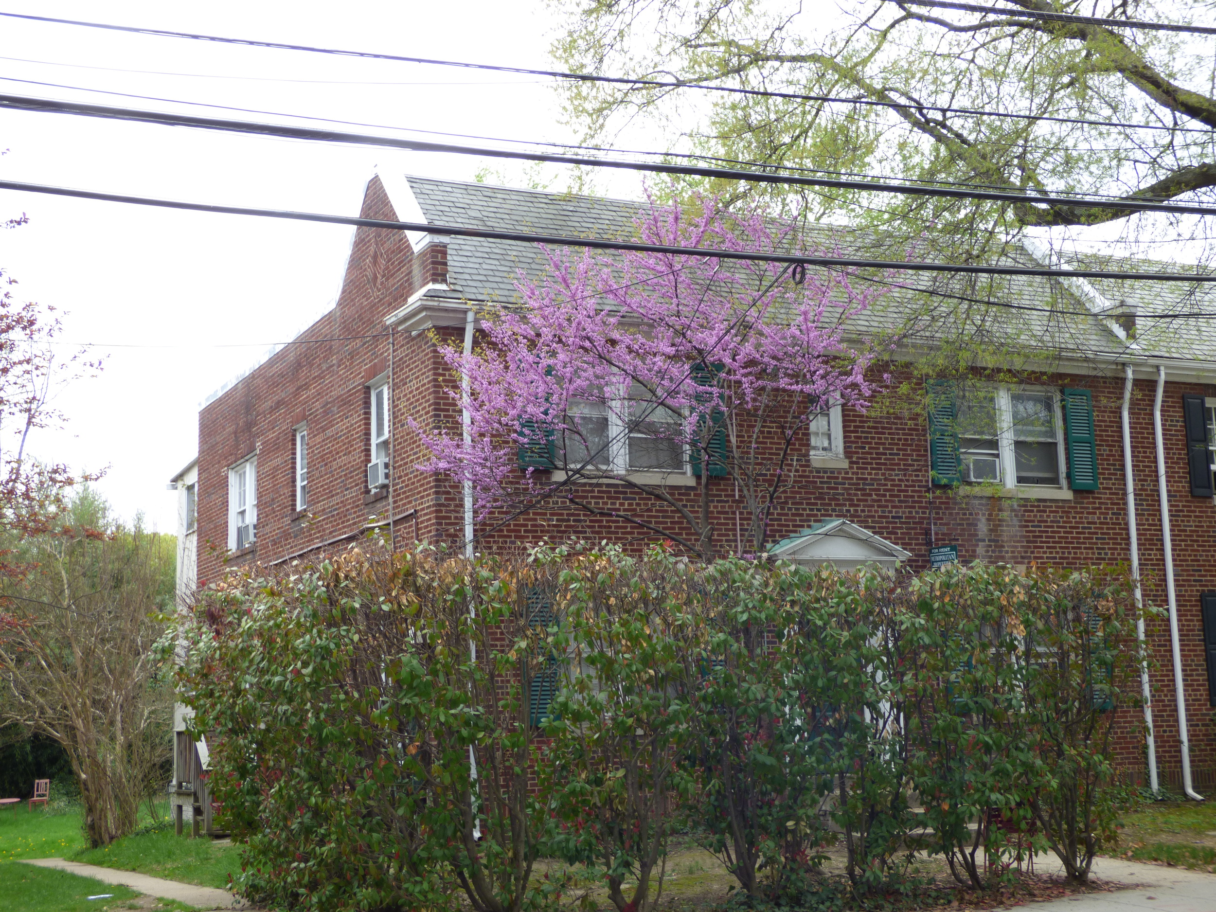 $1975 - 4508 MacArthur Blvd, NW, 2BR/1BA, Available June 1