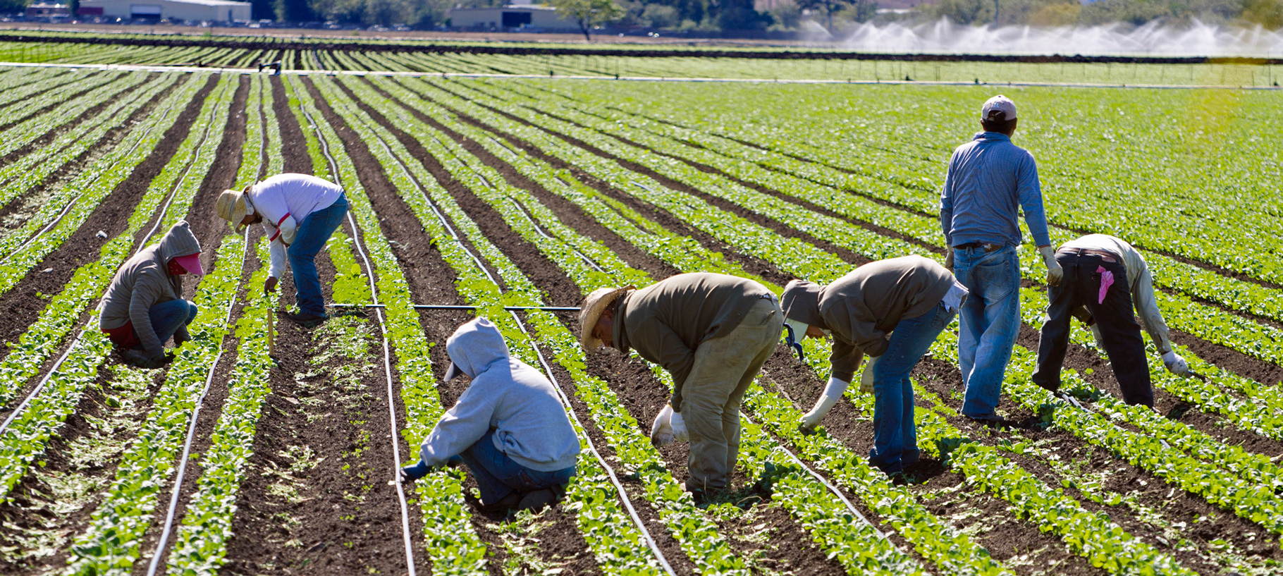 immigrant-farmworkers.jpg