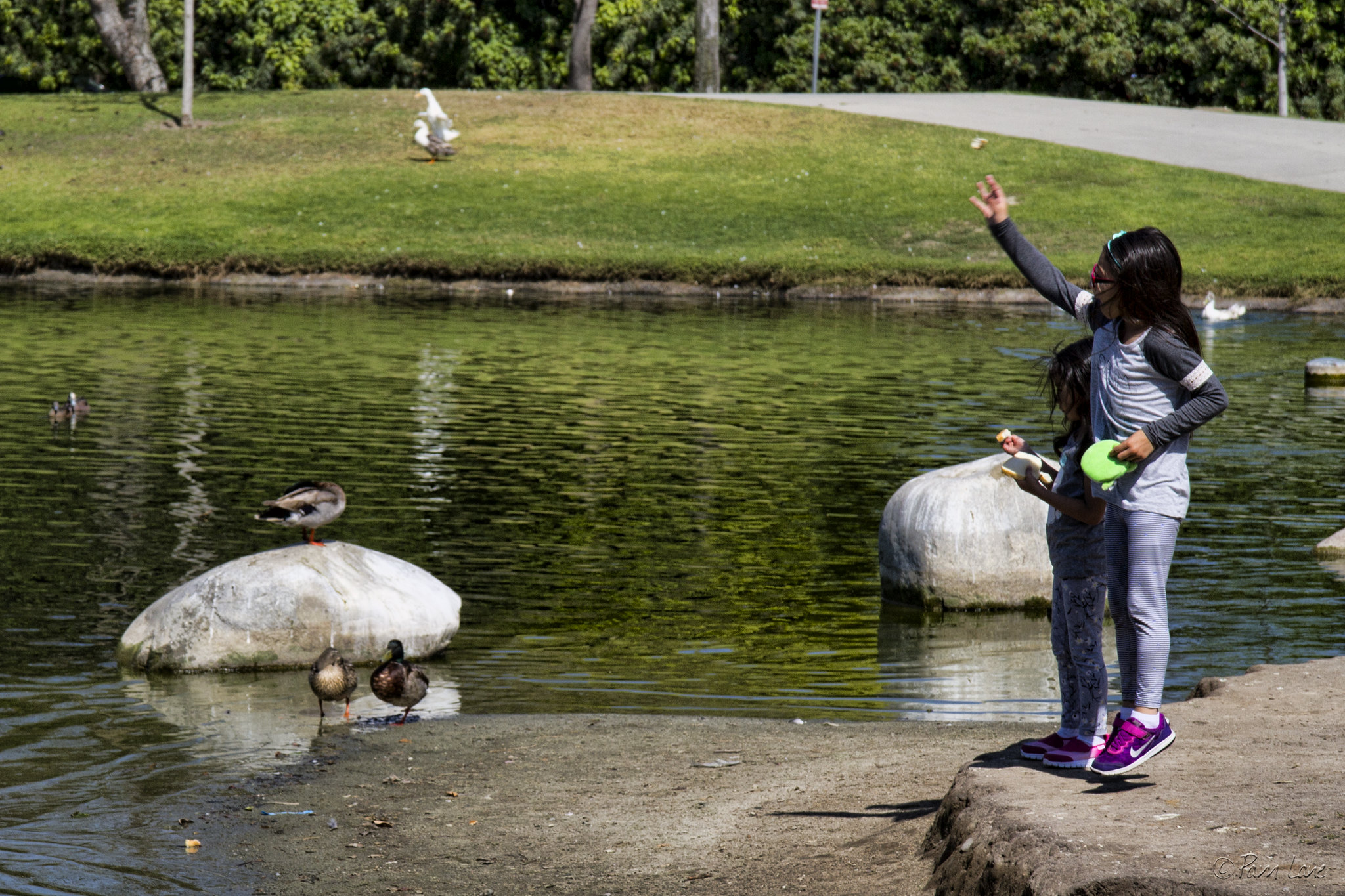 PHOTO BY PAM LANE/DOWNEYDAILYPHOOS.COM   Children feed the ducks at Wilderness Park.