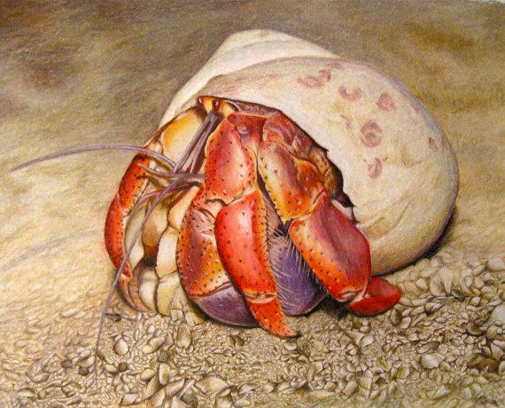 Hermit-Crab-570.jpg