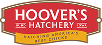 All of our baby chicks come directly from Hoover's Hatchery