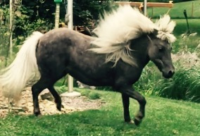 Horse 2019.JPG