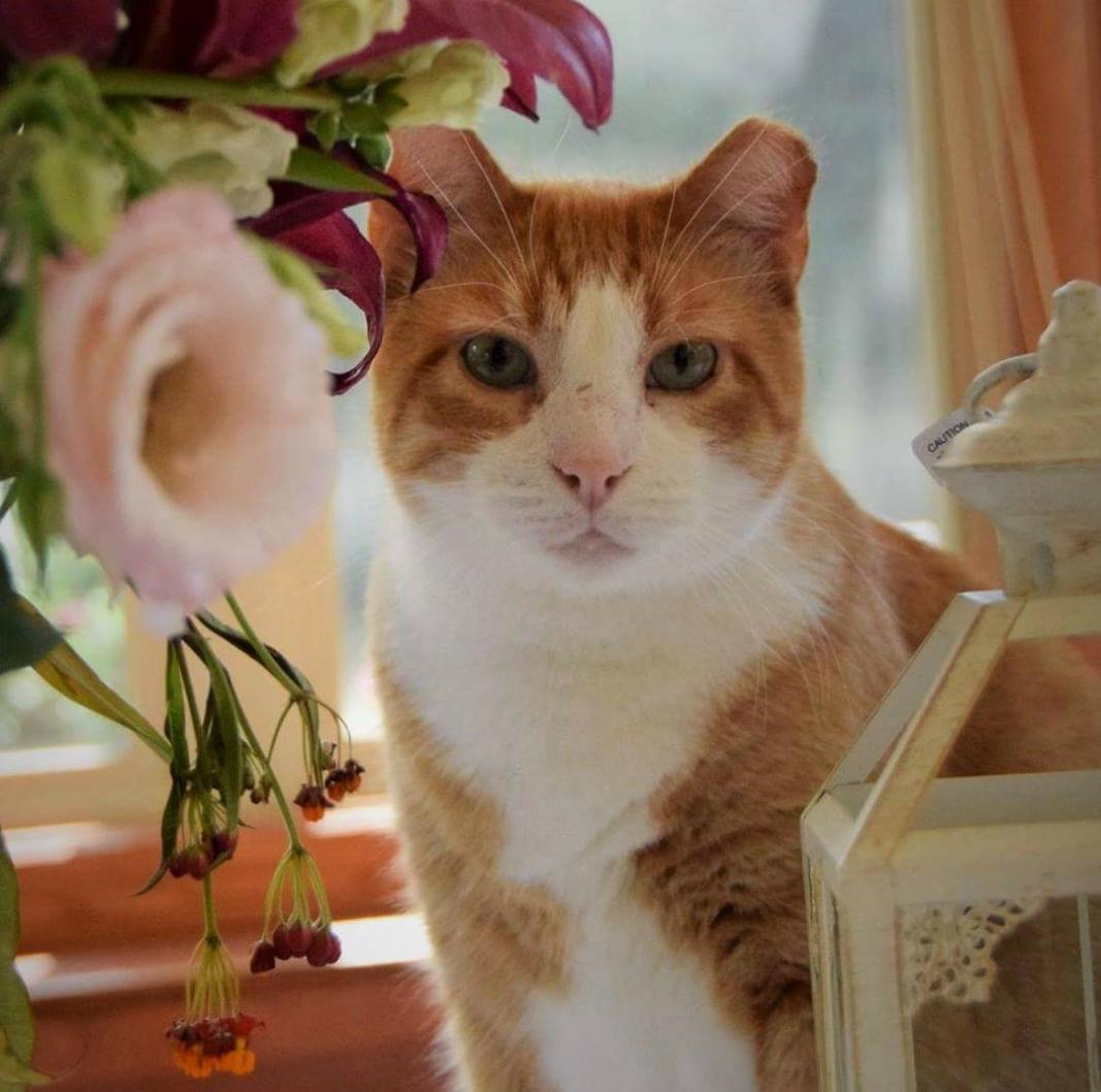 April Cat.jpg