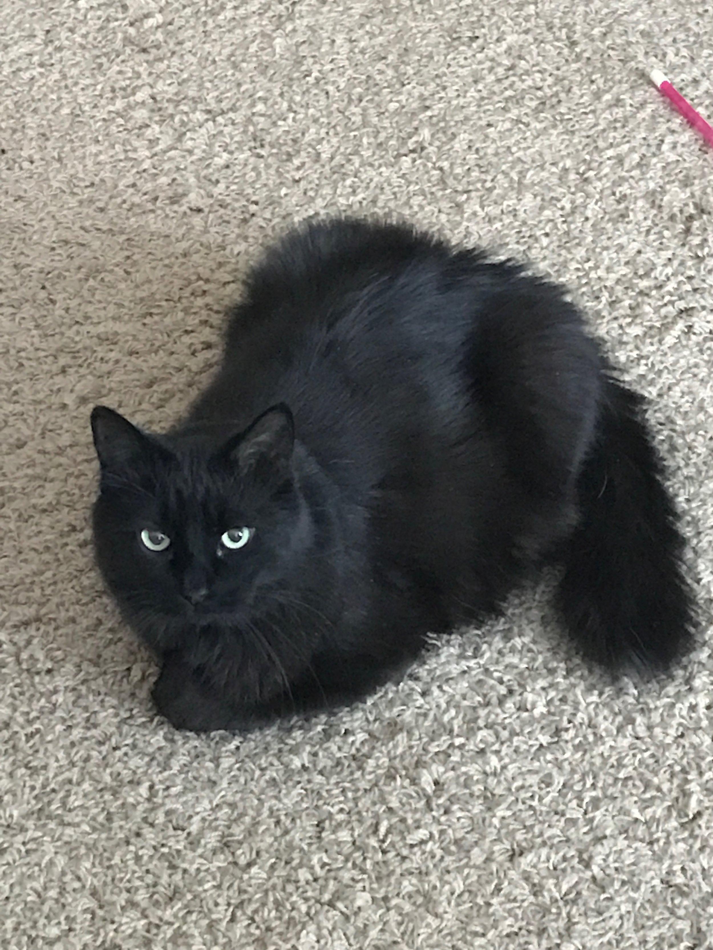 August-cat.JPG