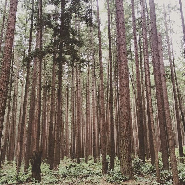 Where the wild things are. Have you heard of Shin Rin Yoku? #forestbathing #destress #downtime #serenitynow #popupmedicine #stresshealth #adrenalhealth #getsassy #beautifulbc #shinrinyoku