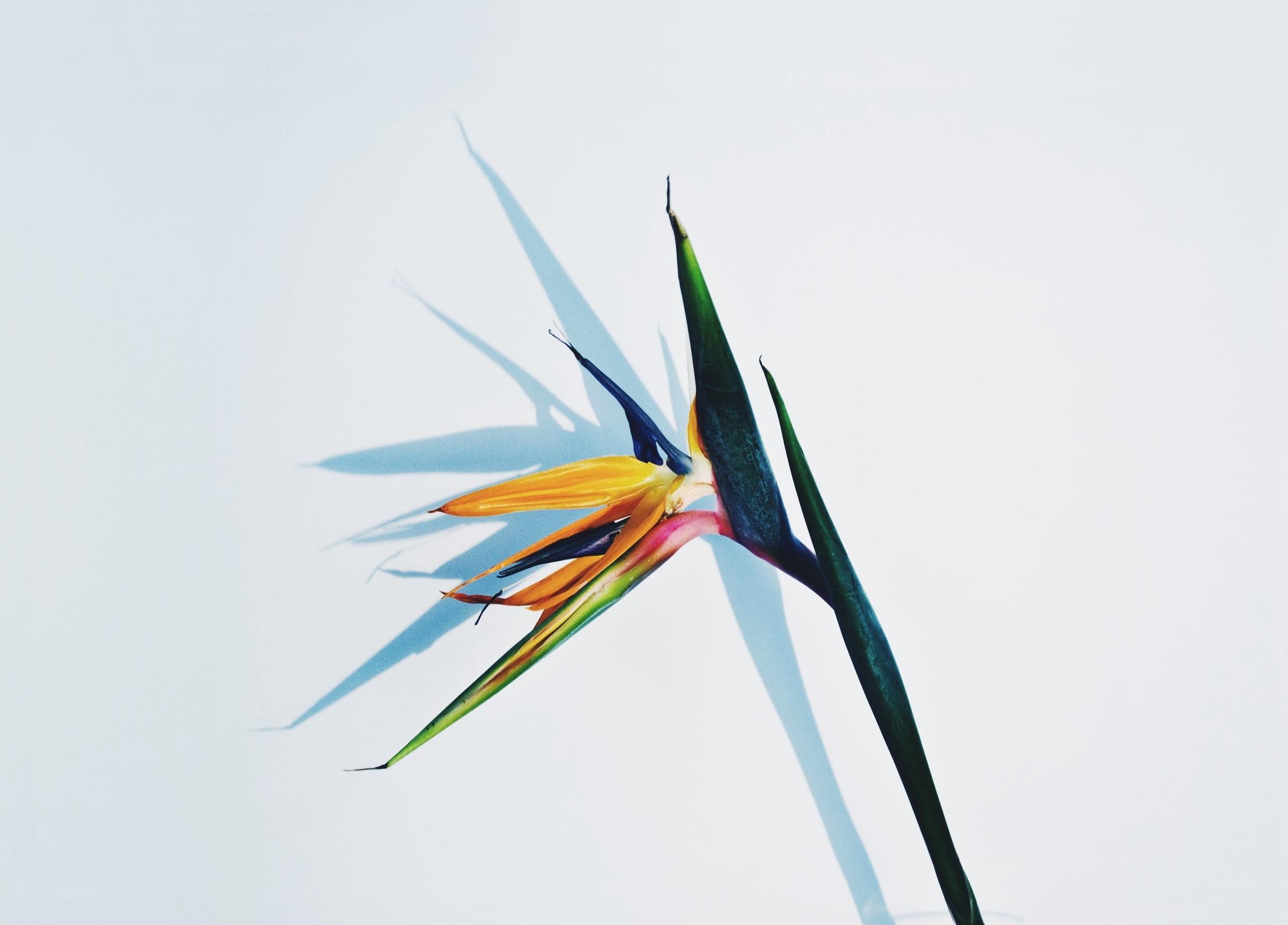 Odd Flower | Sallie Harrison Design Studio