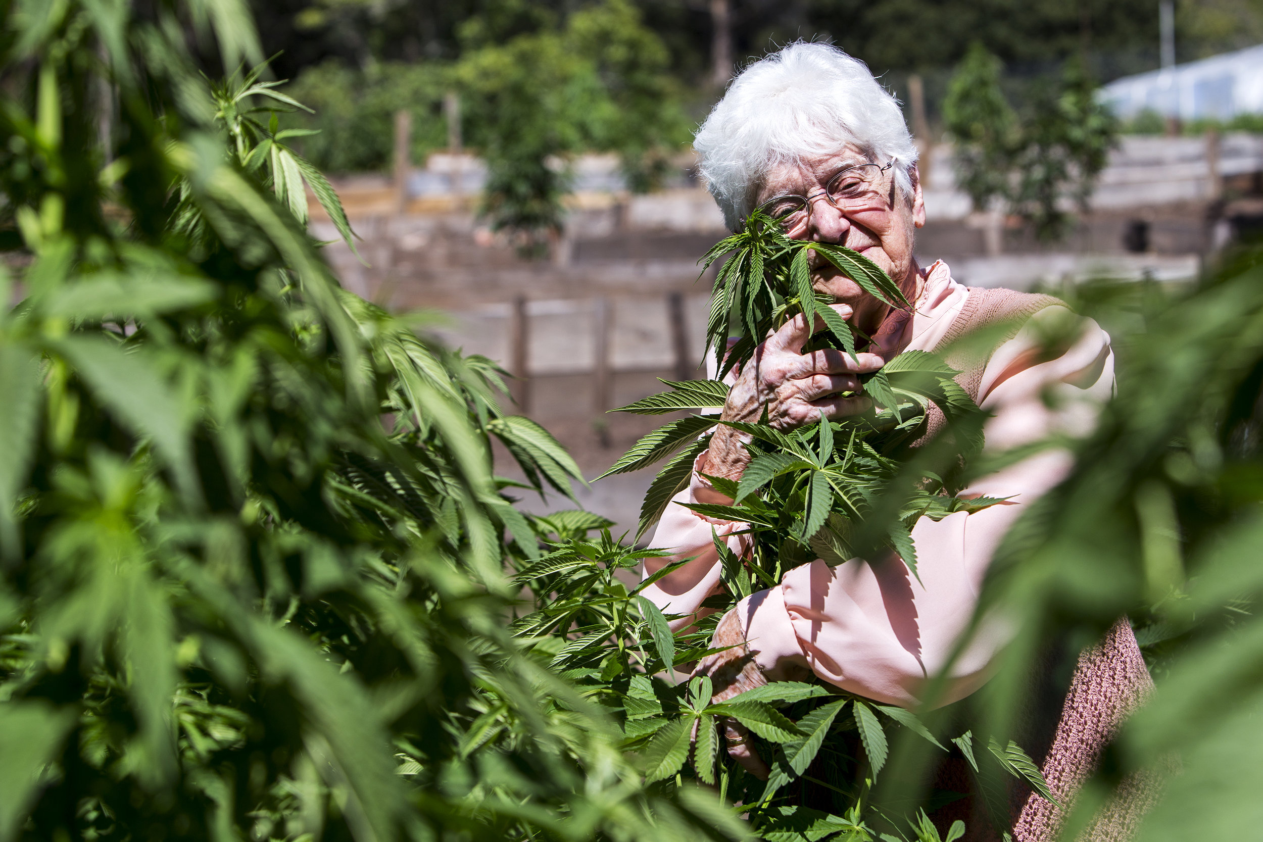 "Aurora Leveroni, also known as ""Nonna Marijuana,"" poses for a portrait at the Wo/Men's Alliance for Medical Marijuana (WAMM) farm in California. Leveroni, a marijuana advocate, noticed that cooking with the plant helped curb her daughter's grand mal seizures."