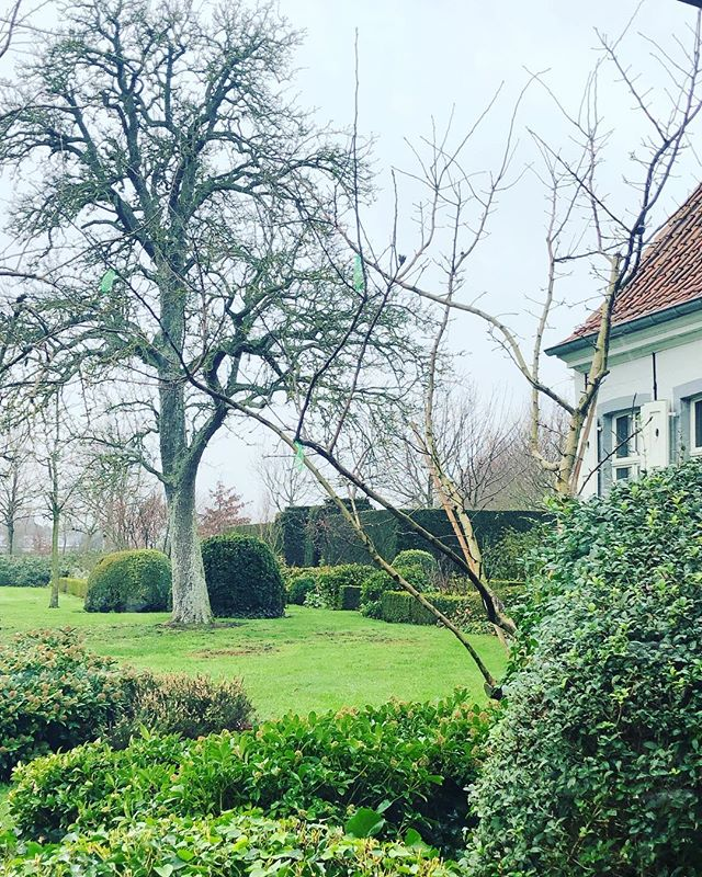 Magnificent pear tree anno 2019 , countryhouse BDC#BDC