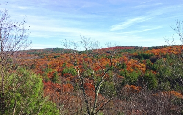 Fall Foliage in Blue Hills, MA. See More At http://www.femalehiker.com/newengland/