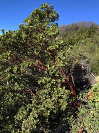 Refrigerator Tree along the Saratoga Gap Trail