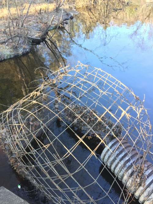 Contraption put up by the DCR to prevent beavers from damming the river.
