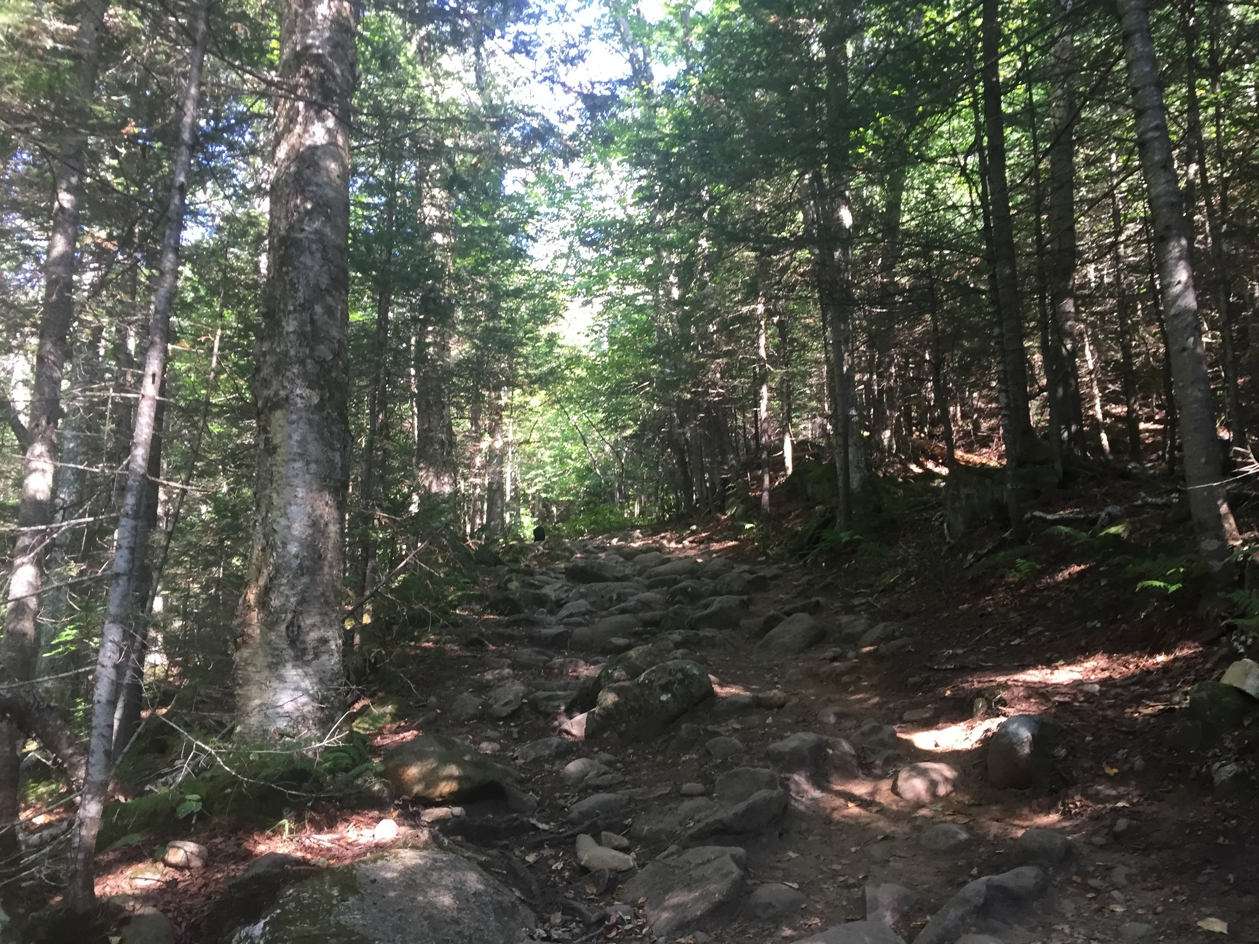 Moderate climbing up Moosilauke!