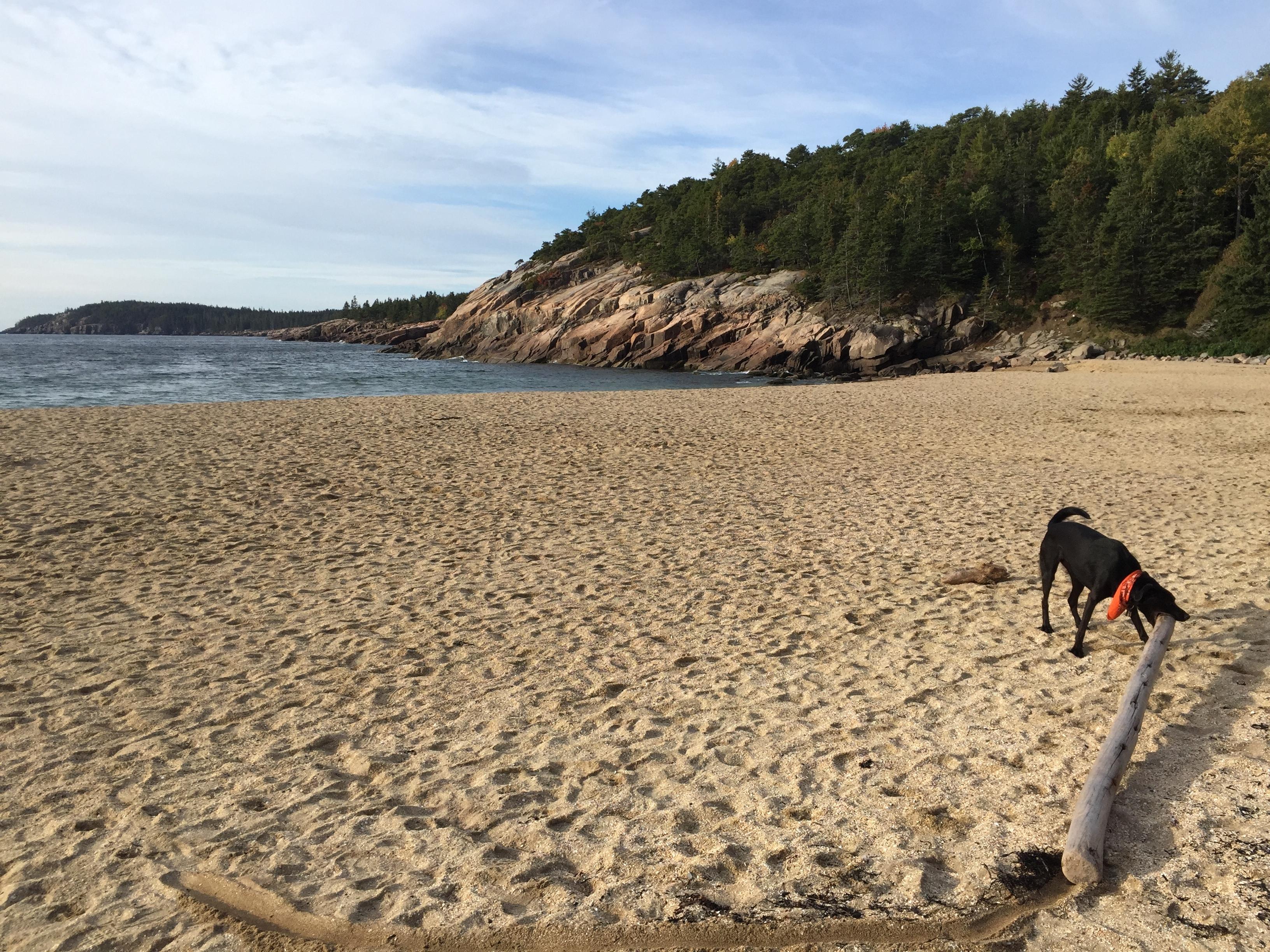 Tucker having fun on the dog friendly Sand Beach (dog friendly when it's not summer).