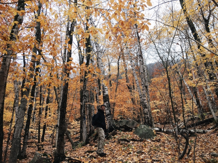 End of fall foliage season at Mount Willey