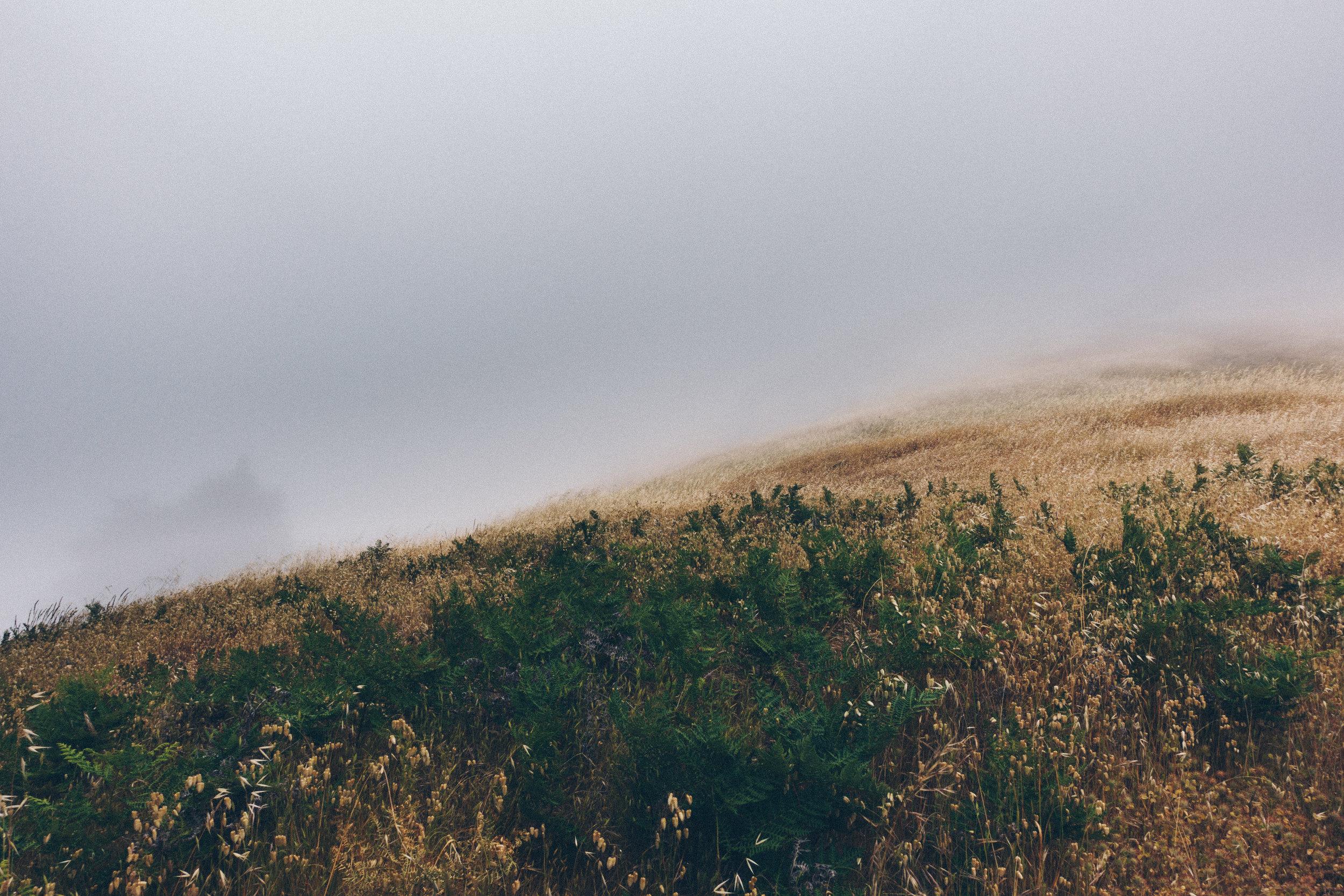 Dipsea trail in California