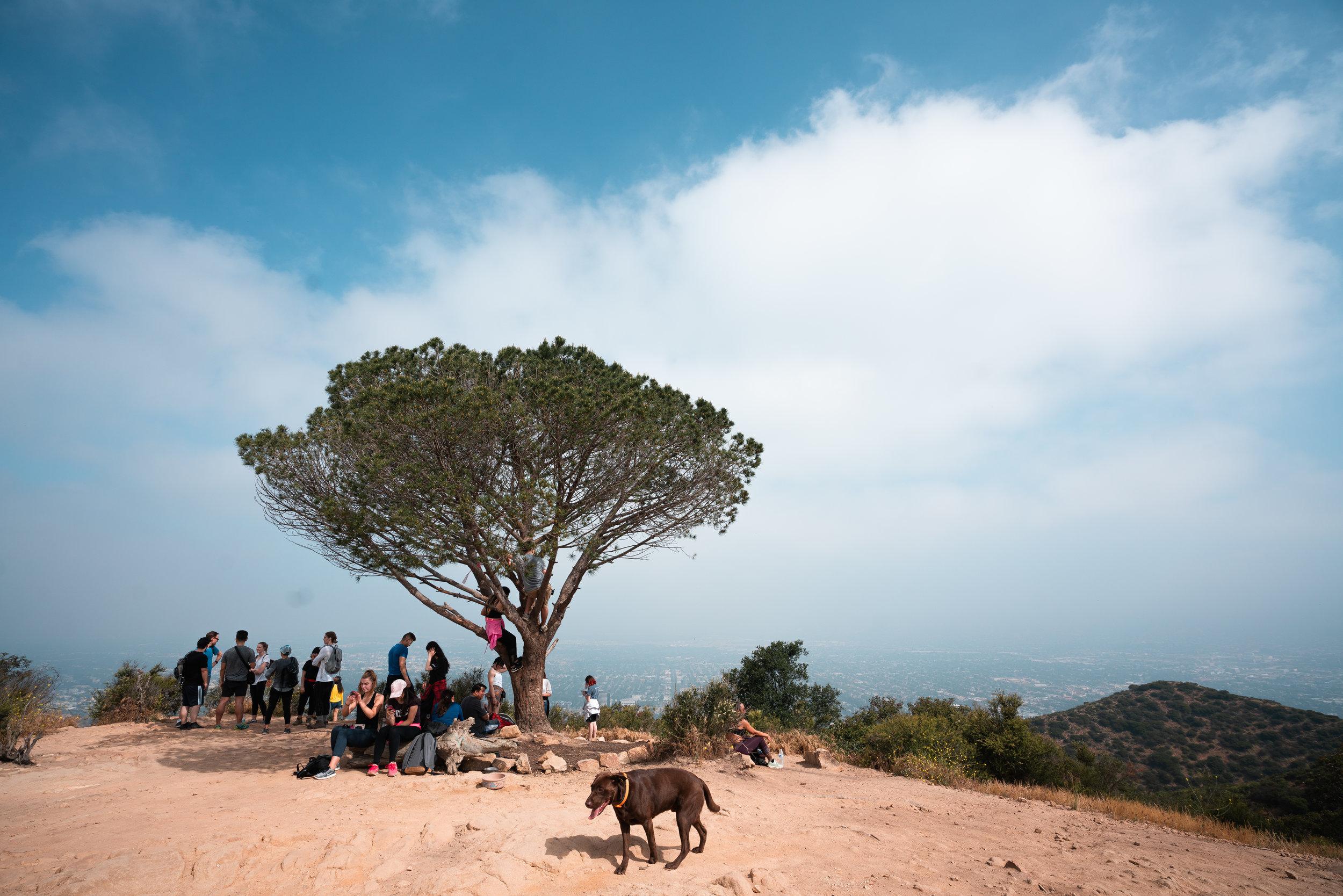 The wisdom tree is pretty crowded :)