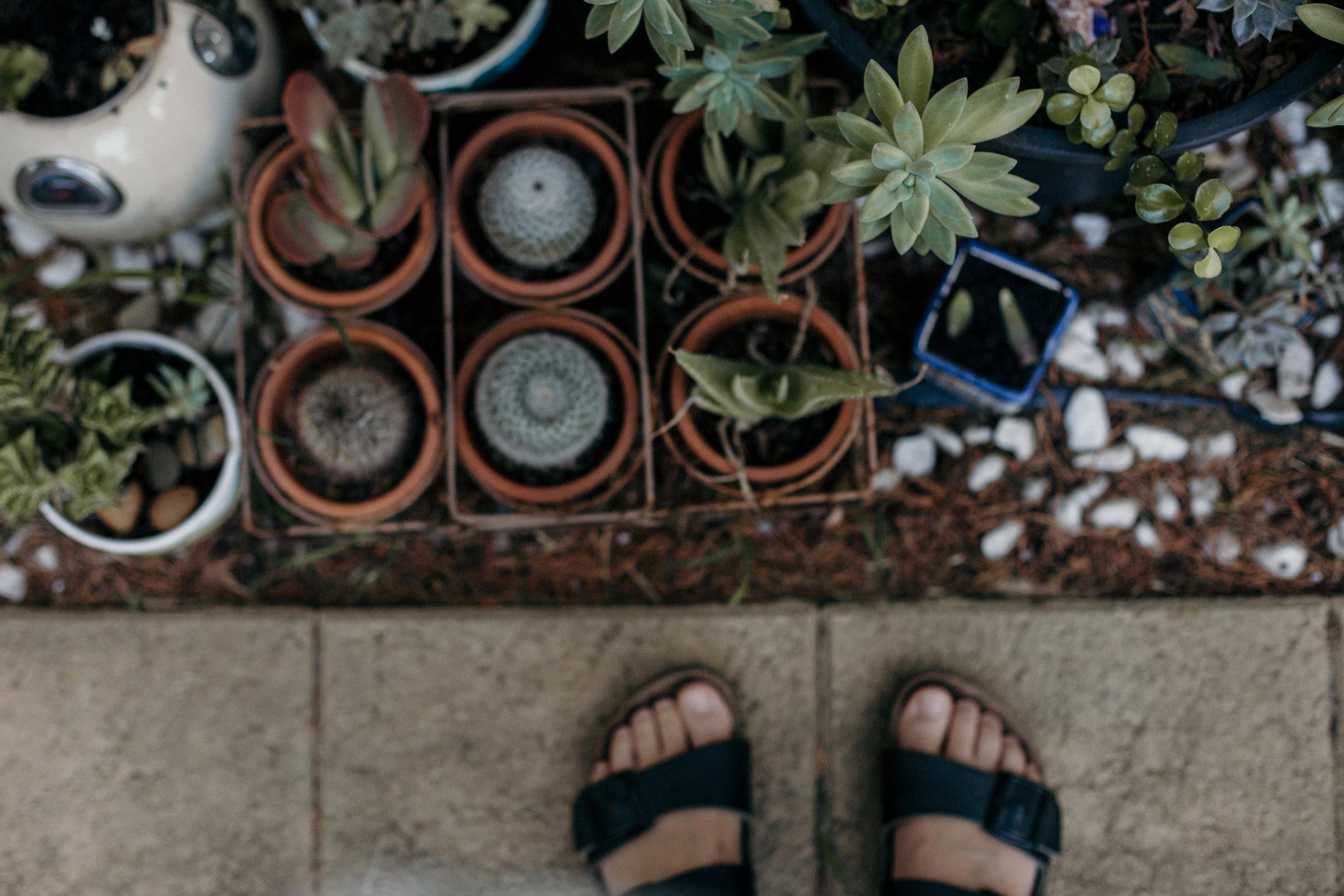 Em Succulents-7.jpg
