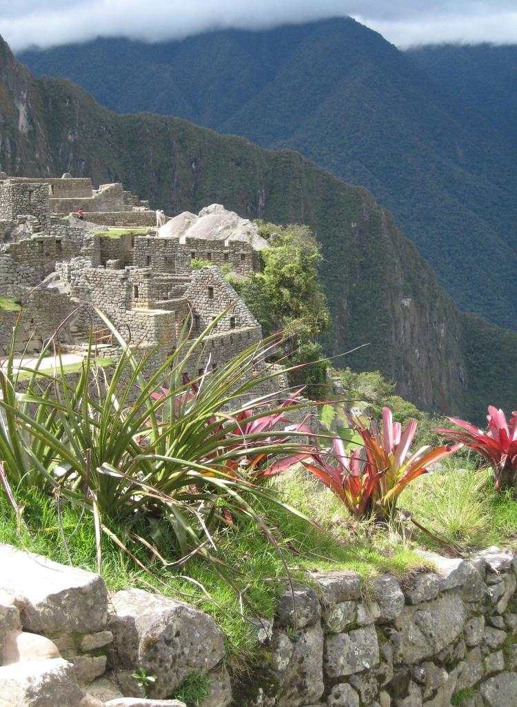 Bromelia at Machu Pichhu